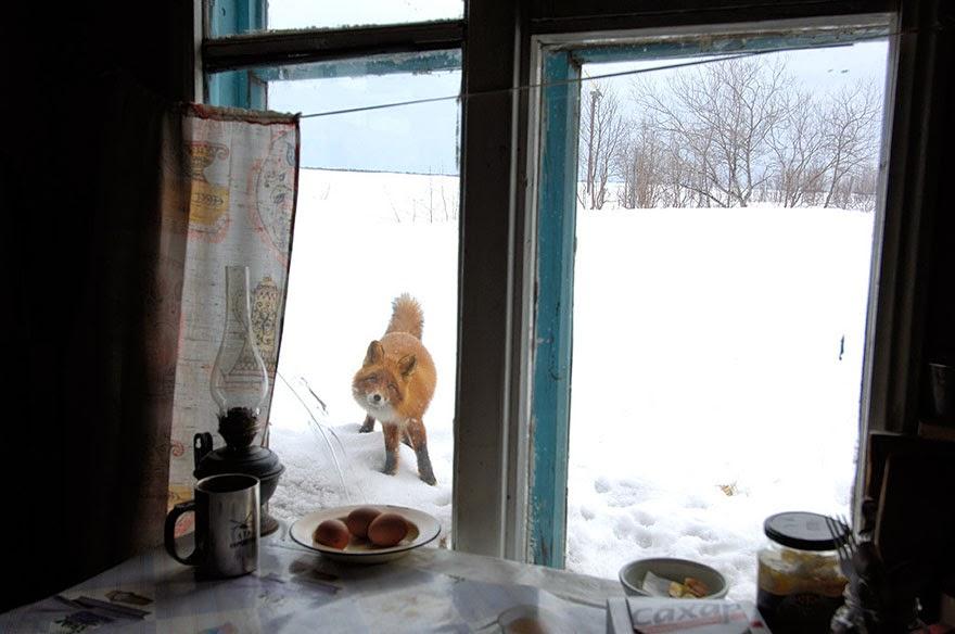 ciekawe zdjęcie, dzikie zwierzęta, zdjęcia w oknie, bored panda
