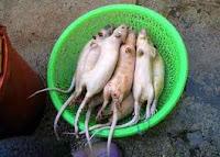 bakso daging tikus