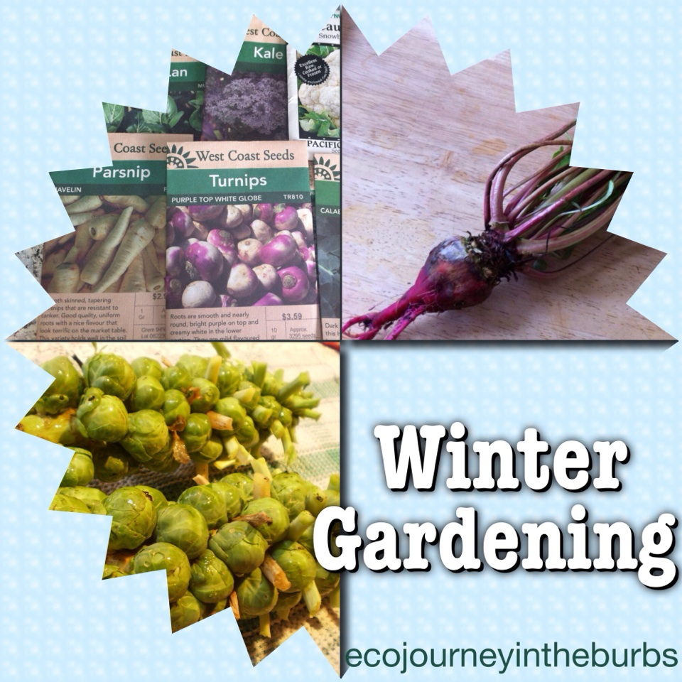 Eco Journey In The Burbs Diy Celery: Eco Journey In The Burbs: Get Ready For A Winter Garden Now