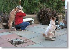 videos com cachorros