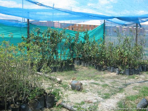 Construcci n de un vivero mayo 2012 for Construccion de viveros