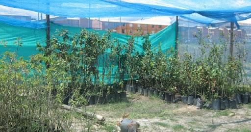 Construcci n de un vivero clases de vivero for Construccion de viveros forestales
