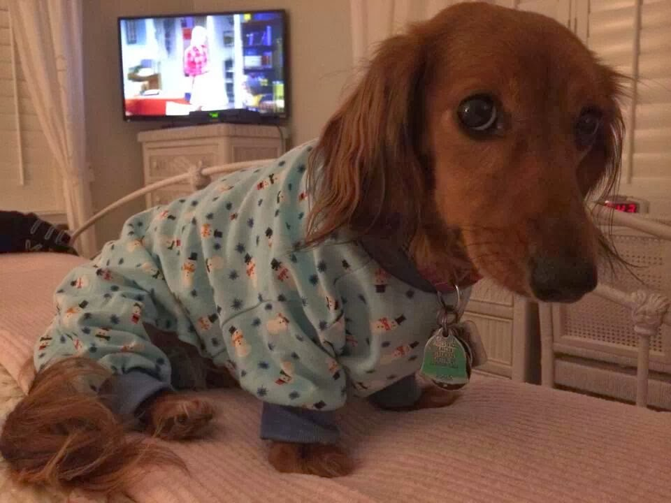 Cute dogs - part 4 (50 pics), dog pictures, cute dog wears pajama