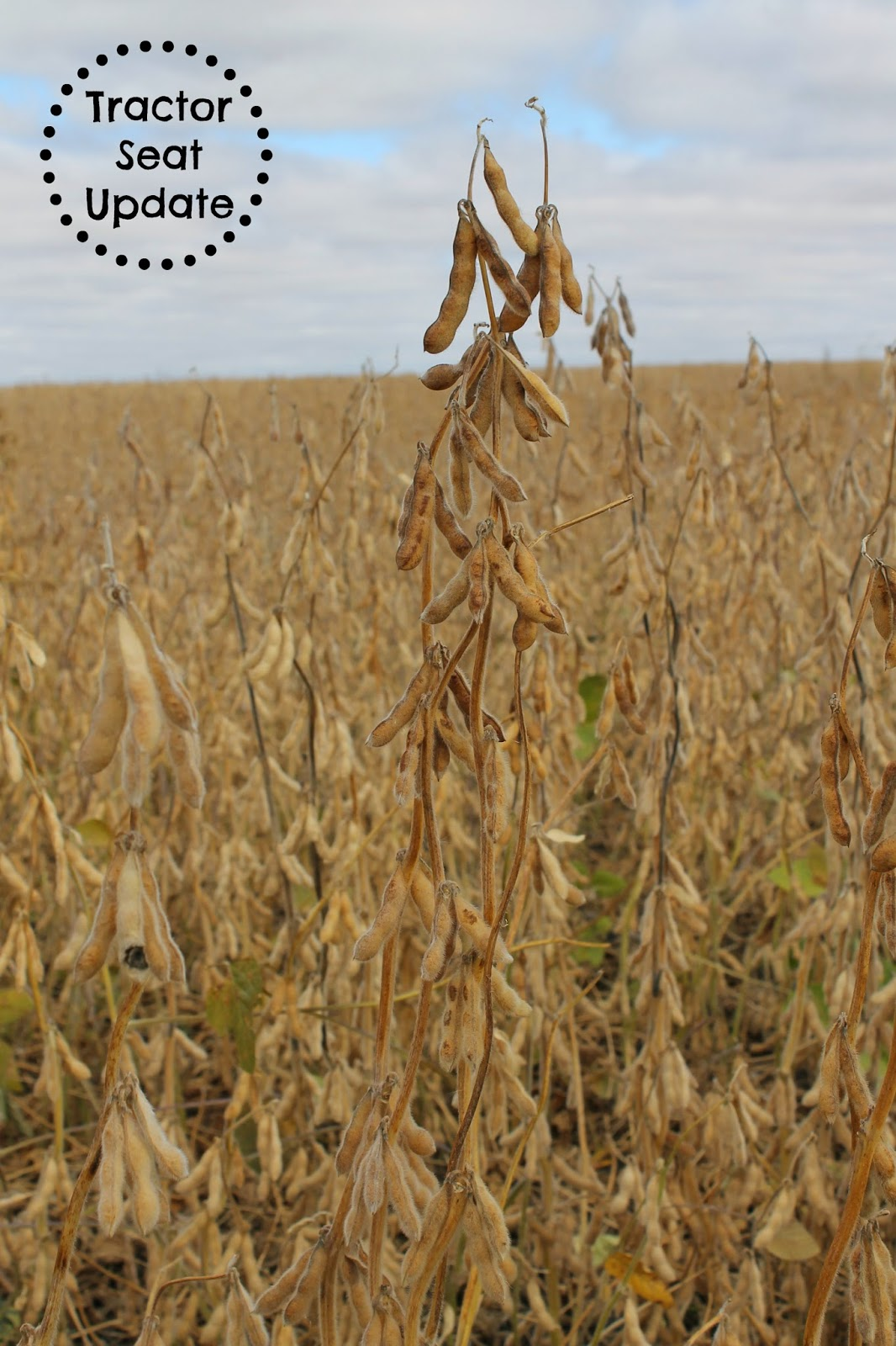 Tractor Seat Update - Soybean Harvest