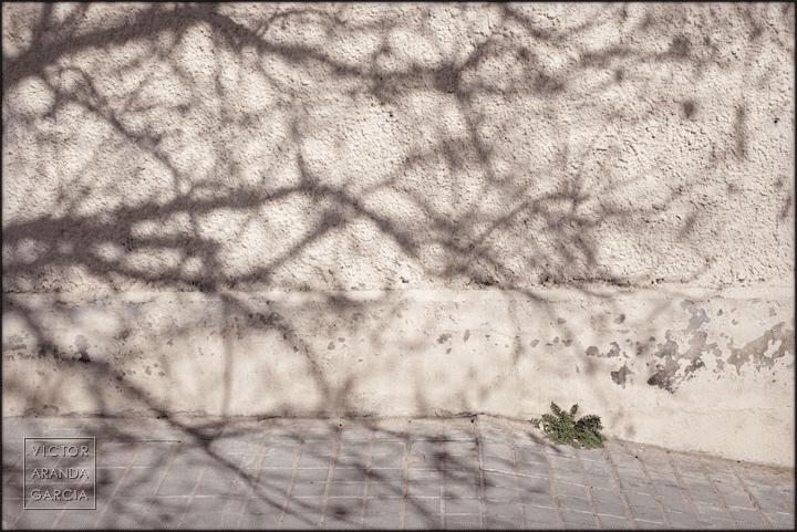 fotografia,naturaleza_urbana,valencia,planta,ciudad,sombra
