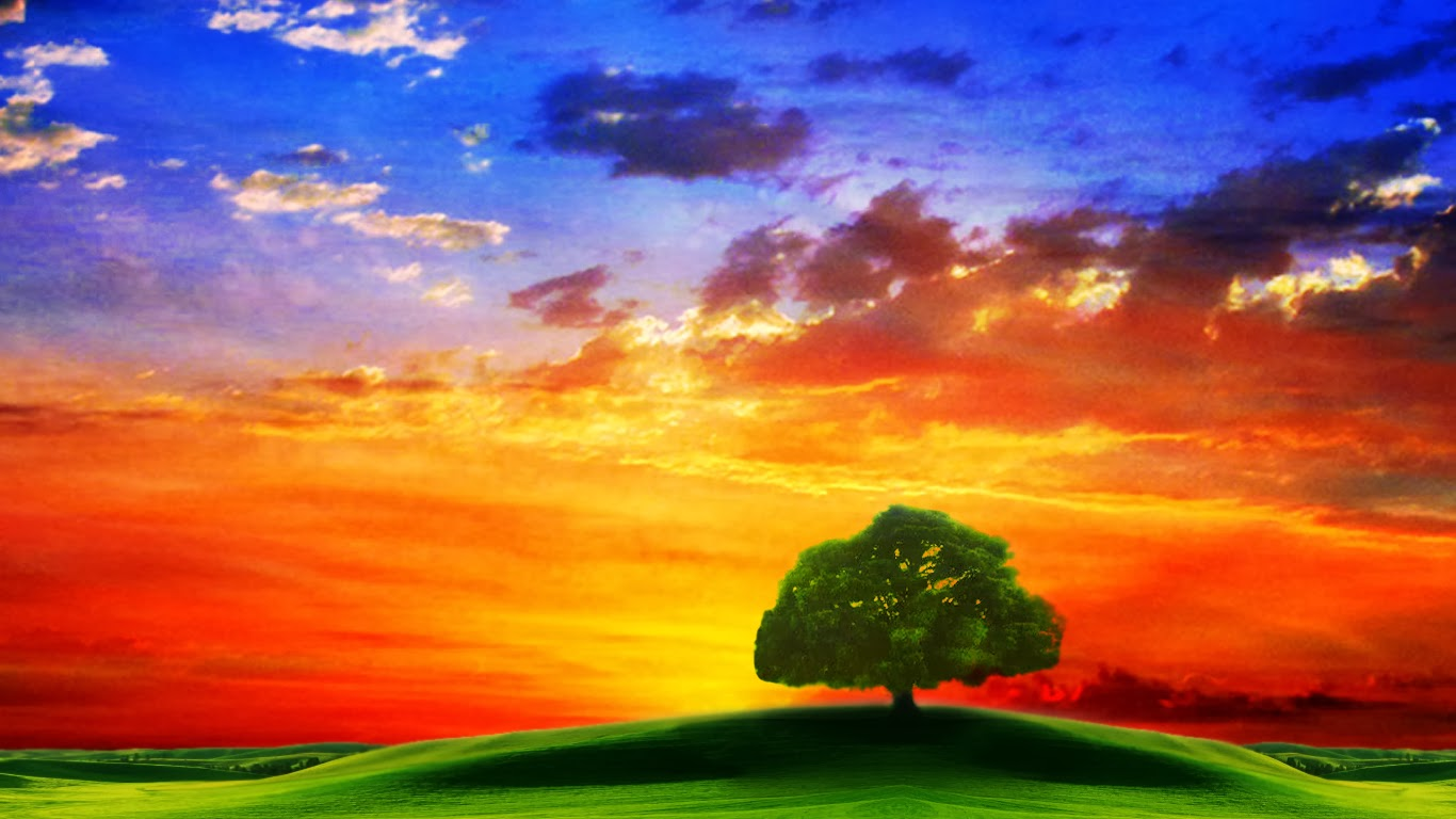Beautiful HD Wallpapers tree