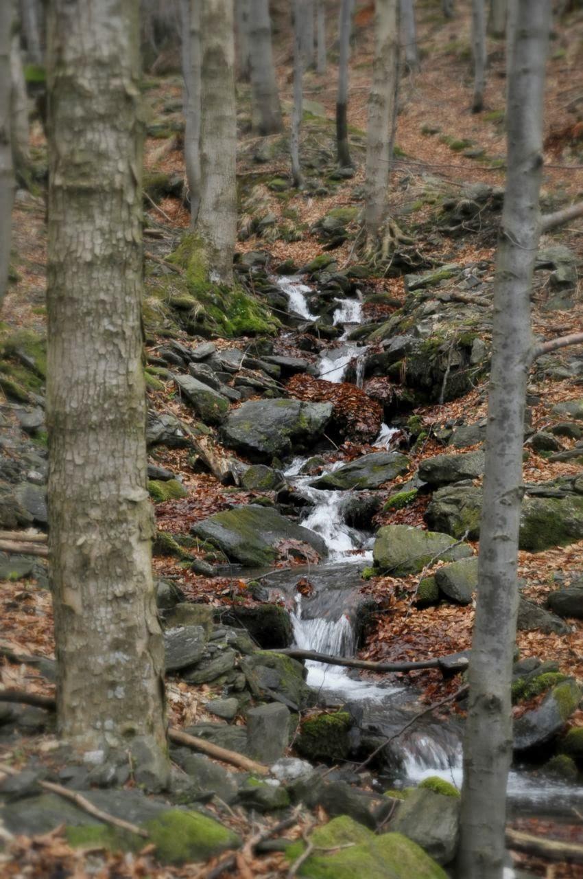 Strumyk spływający ze zboczy Czarnej Góry