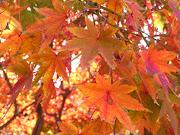 A Look Ahead to Fall Foliage Season