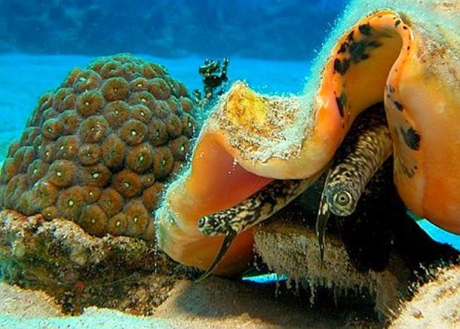 أجمل الأسماك الاستوائية الملونة   - صفحة 3 Colorful-tropical-fishes-19