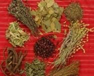 Pengaruh Tanaman Herbal Bagi Kesehatan