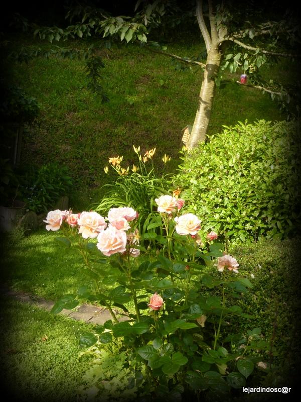 Le jardin d 39 oscar juillet au jardin for Jardin 5 juillet biskra