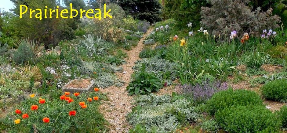 Prairiebreak