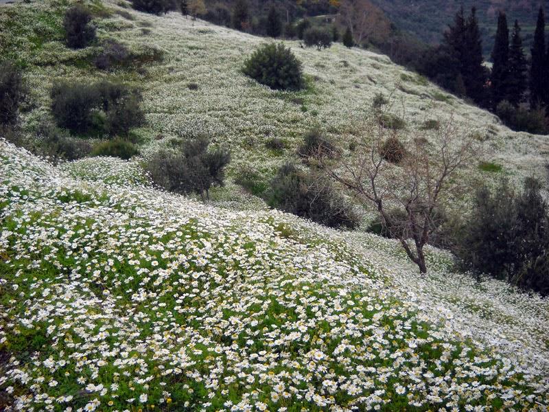 Samos in fiore