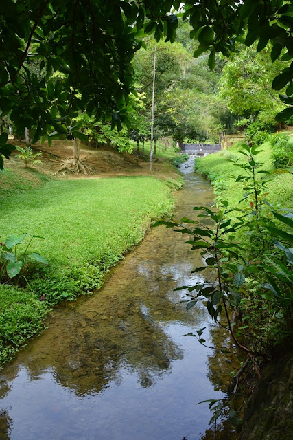 Roman Forest Park