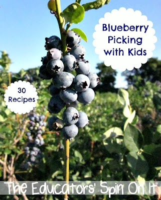 Blueberry Picking I The Educators' Spin On It