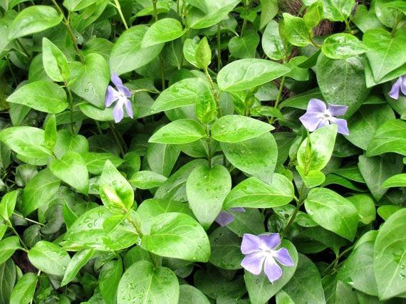 garden sopelana mundo verde jardinarium plantas tapizantes