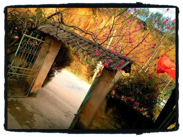 Hoa Đào vẫn hồng trước sân nhà tôi