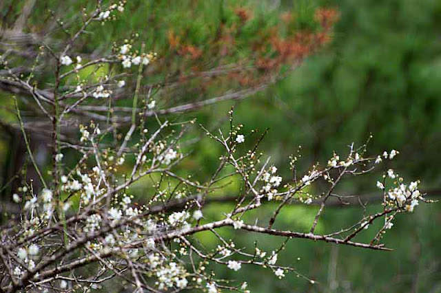 greens, reds, white, trees, flowers, branches