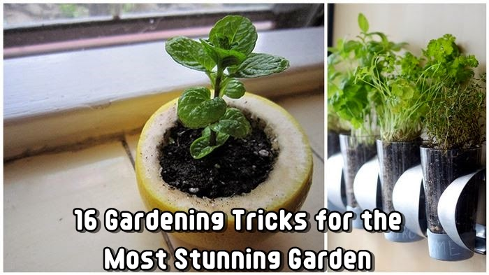16 Gardening Tricks for the Most Stunning Garden
