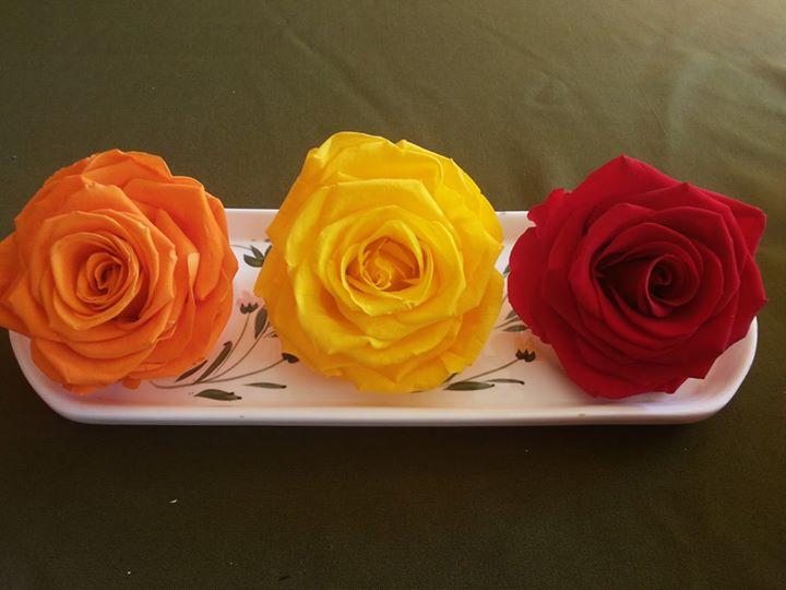 Rosas Preservadas Naturales ¡Duran 4 Años!