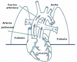 Asfixia perinatal y reanimación