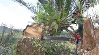citisfm-Pon Yahya: Seratusan Pekerja Saya Tetap di Lokasi