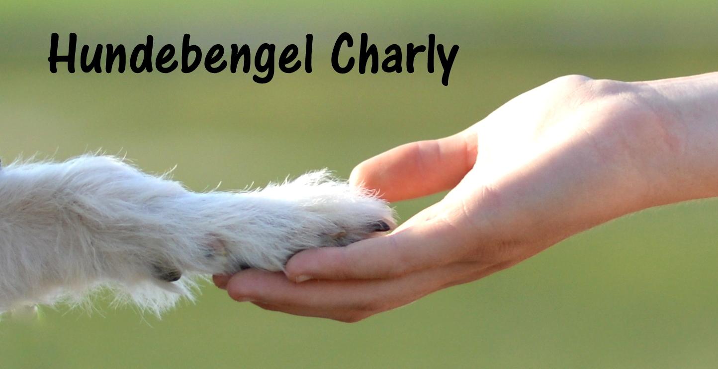 Hundebengel Charly | Hundeblog