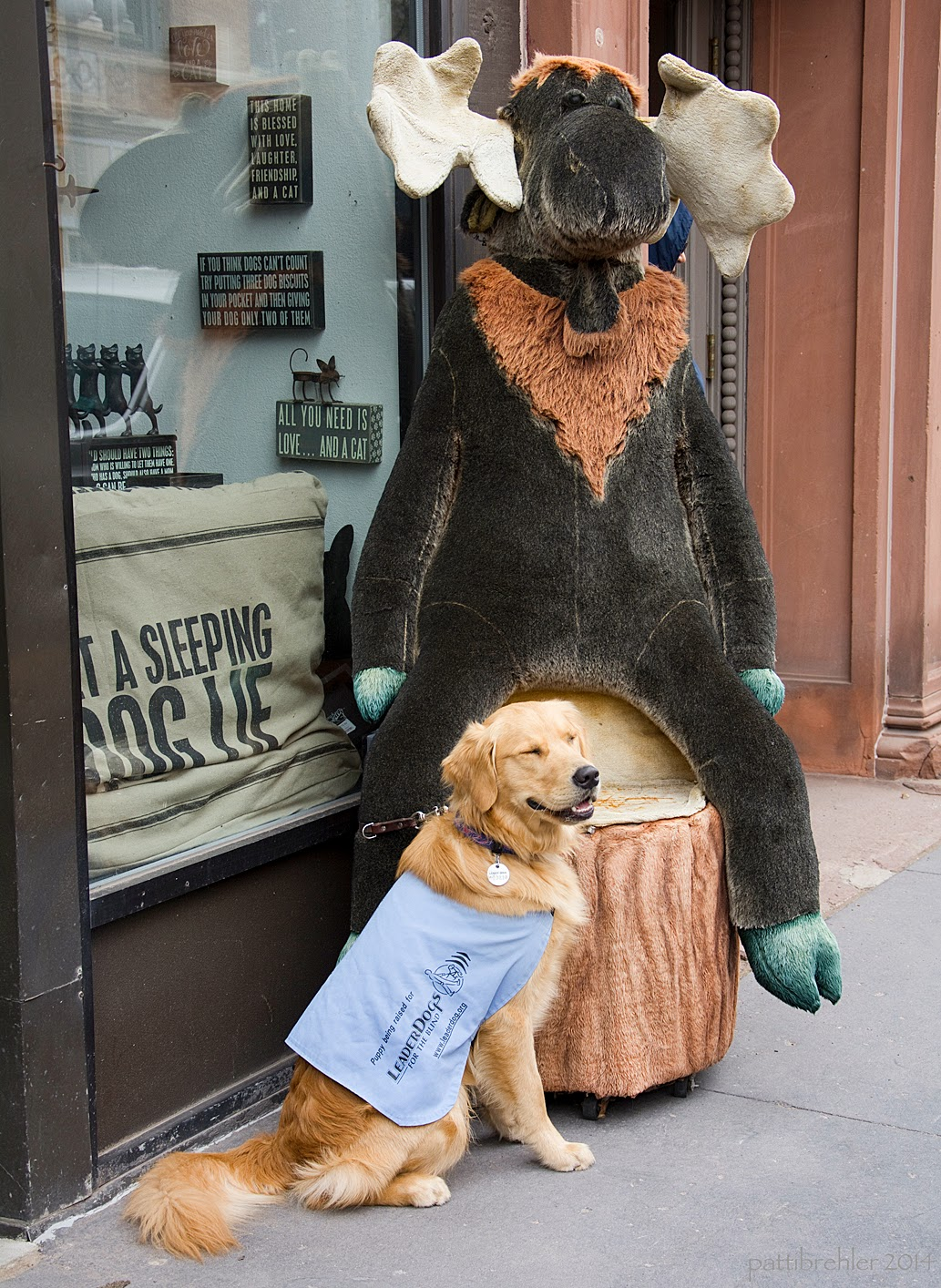 A golden retriever puppy is sitting in front of a storefront window and a large wooden statue of a moose. The moose is sitting on a tree stump. The puppy is wearing the baby-blue wokring jacket - a Future Leader Dog.