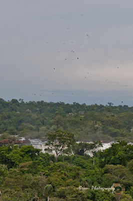 Birds of prey flying over Iguazu falls - Cataratas de Iguacu