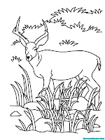 Mewarnai Antelop Sedang Mencari Makan