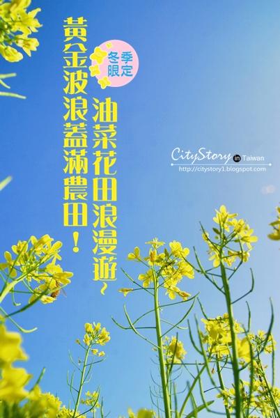 【彰化縣●芬園鄉●油菜花】冬季裡的黃金波浪!油菜花田的浪漫