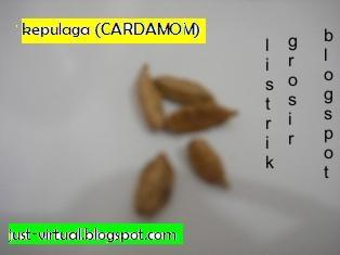 kapulaga cardamon