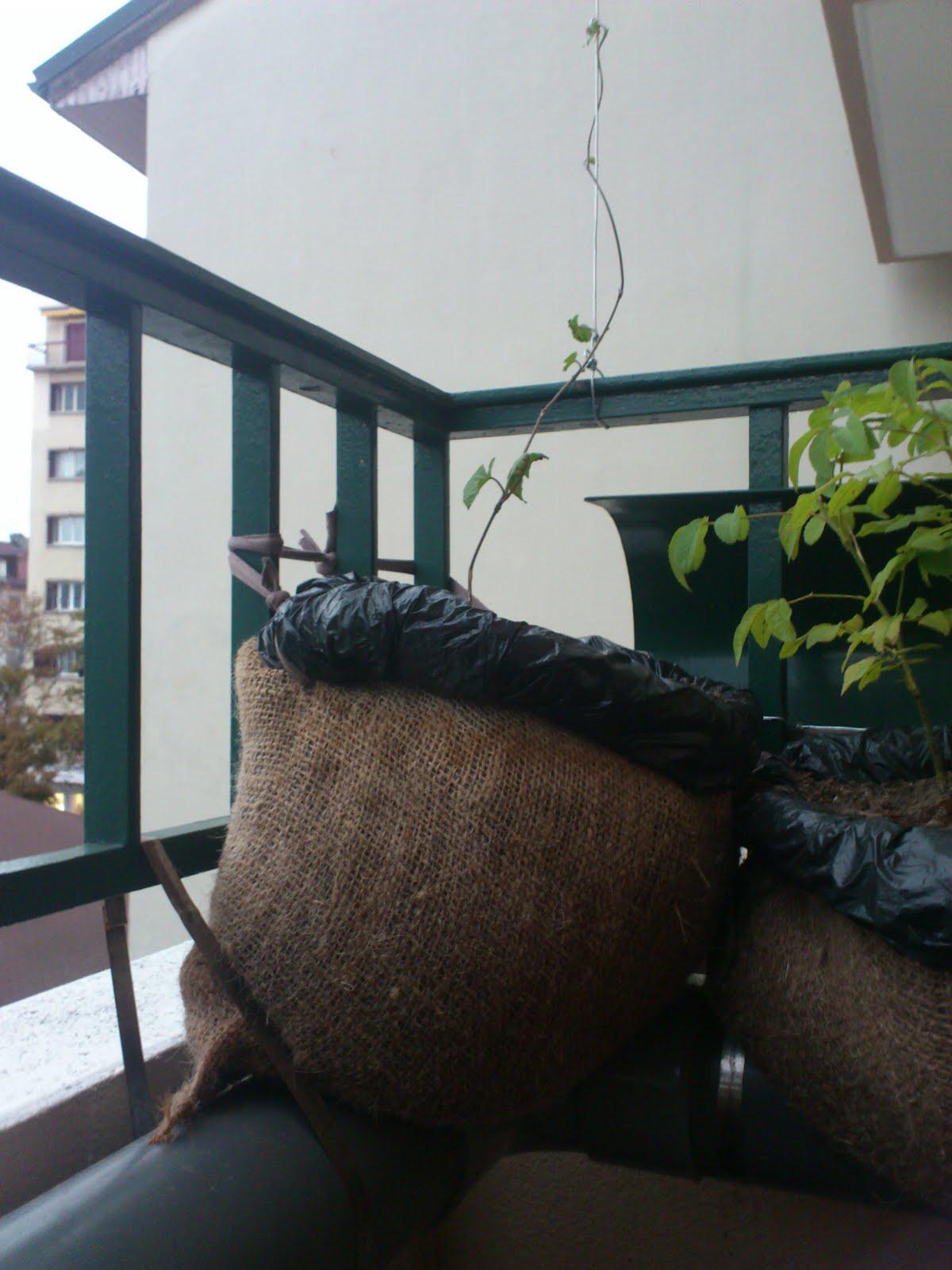 arrosage par capillarité pour balcon abrité   bap book