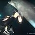 Golfinho preso em linha de pesca pede ajuda de mergulhadores e é salvo
