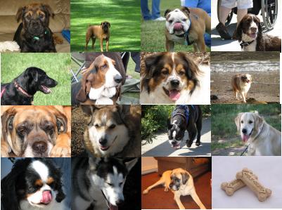 Gambar Anjing Ras | Foto Anak Anjing Lucu