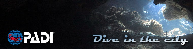 Dive in the city
