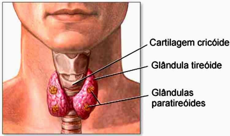 A tireoide é uma glândula, responsável pela produção dos hormônios T3 e T4, quando as taxas desses hormônios se alteram, provocam sintomas como: cansaço, sonolência, unhas quebradiças, aumento ou diminuição de peso, desânimo, cabelos e peles secos...