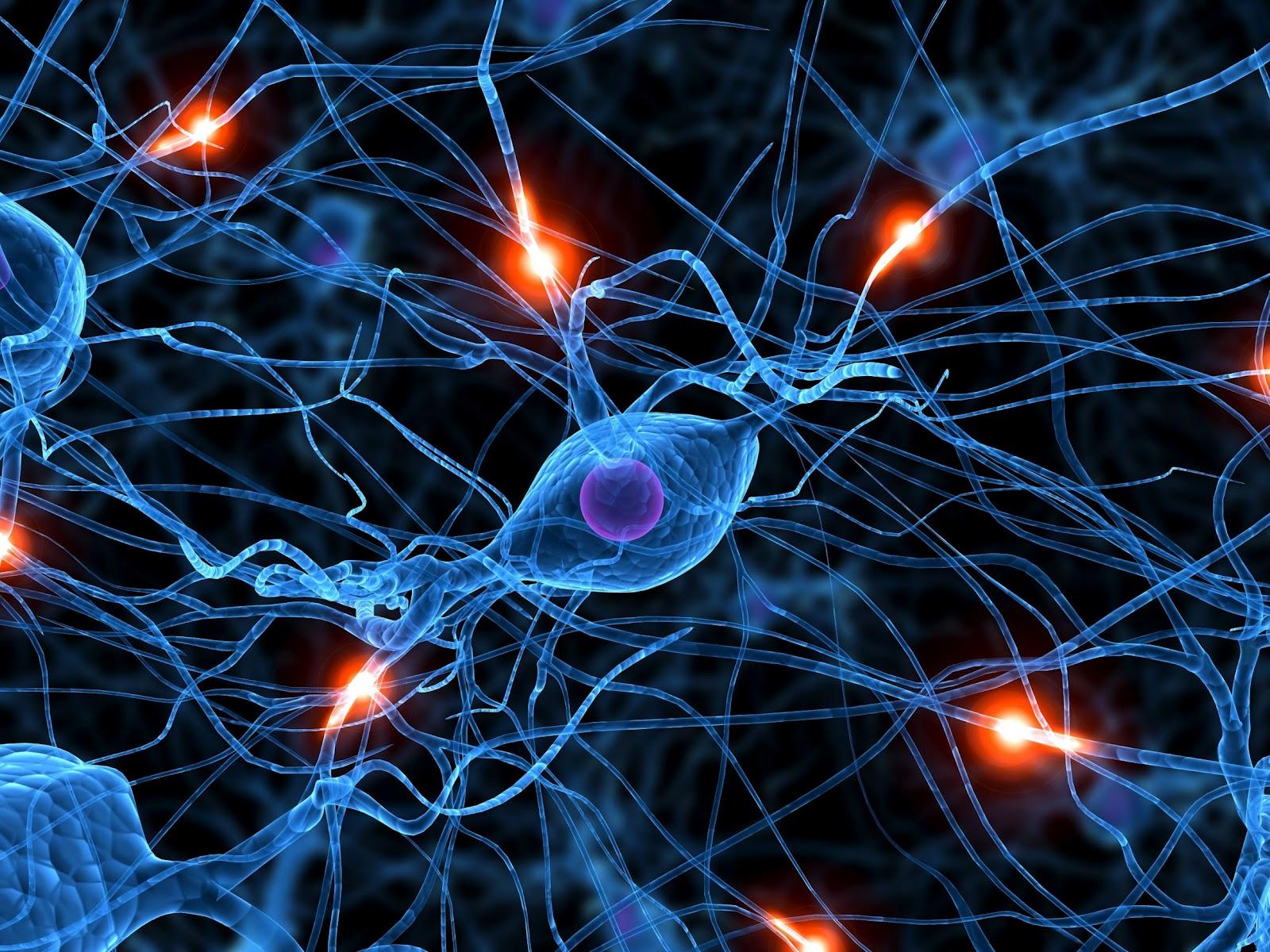 http://1.bp.blogspot.com/-sgEK_aD_ZUI/T0fsFMIxMFI/AAAAAAAABWQ/chJcrzZ4Fv0/s1600/neurona.jpg