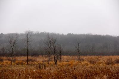 wetland near William O'Brien state park, December 2014