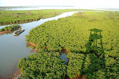 Xuan Thuy National Park - the 50th mangrove forests of the world