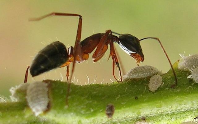 مخازن طعام النمل,عجائب النمل,حشرات اليفة,زجاج,النمل الزجاجي,بيوت النمل,دكاء النمل