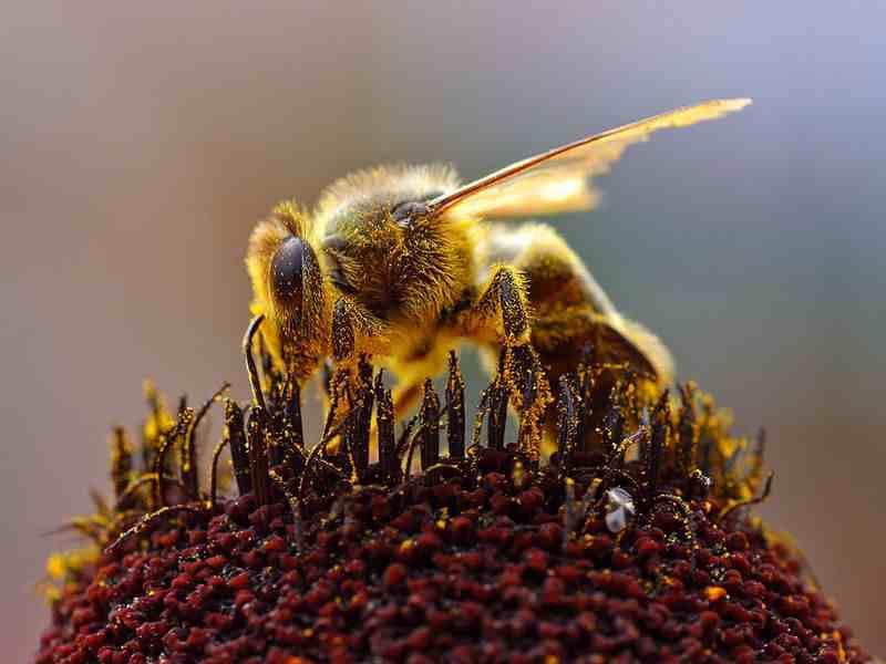 نتيجة بحث الصور عن تشريح النحلة