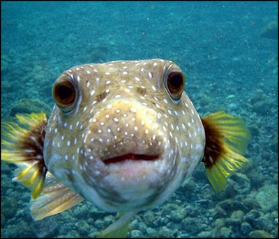 Ahza Blog: Wajah Ikan Yang Lucu