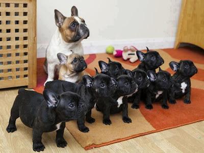 cachorros atentos