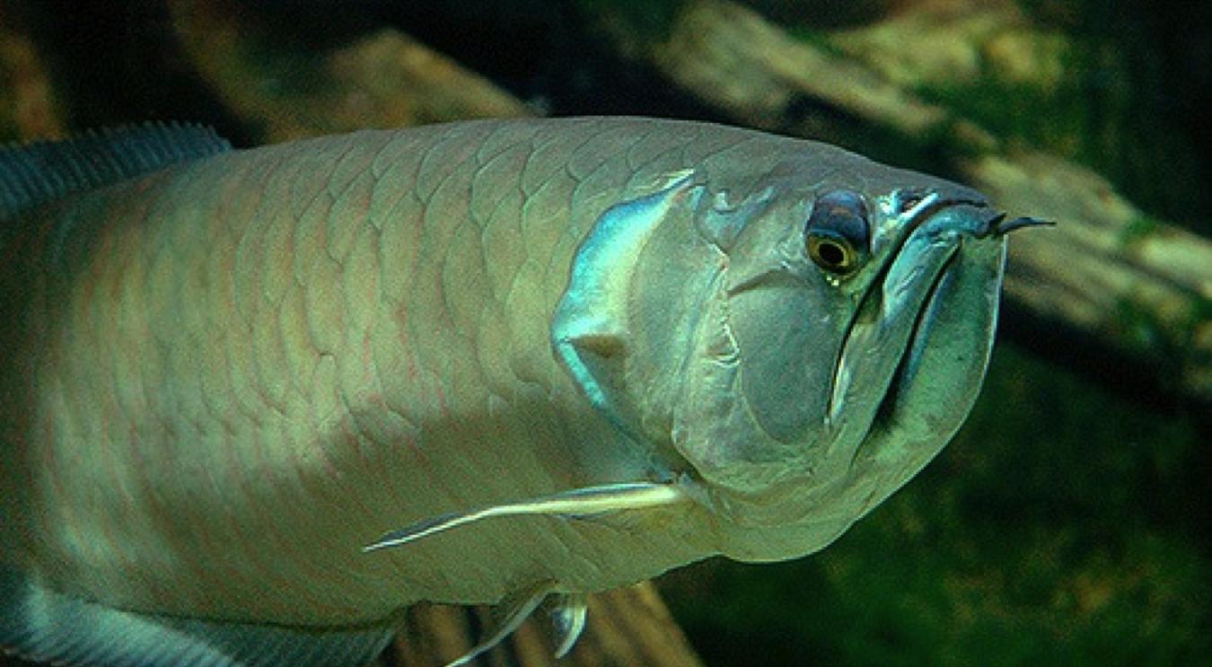 Exigencias sanitarias para asegurar la exportaci n de for Manual de peces ornamentales