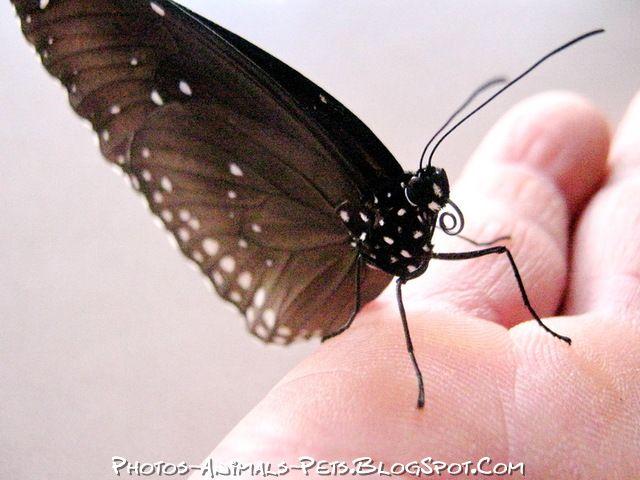 http://1.bp.blogspot.com/-shSdnyDLHRA/Tt-VjSY6UHI/AAAAAAAACmY/Kr4JU5q0sL0/s1600/butterflies.jpg