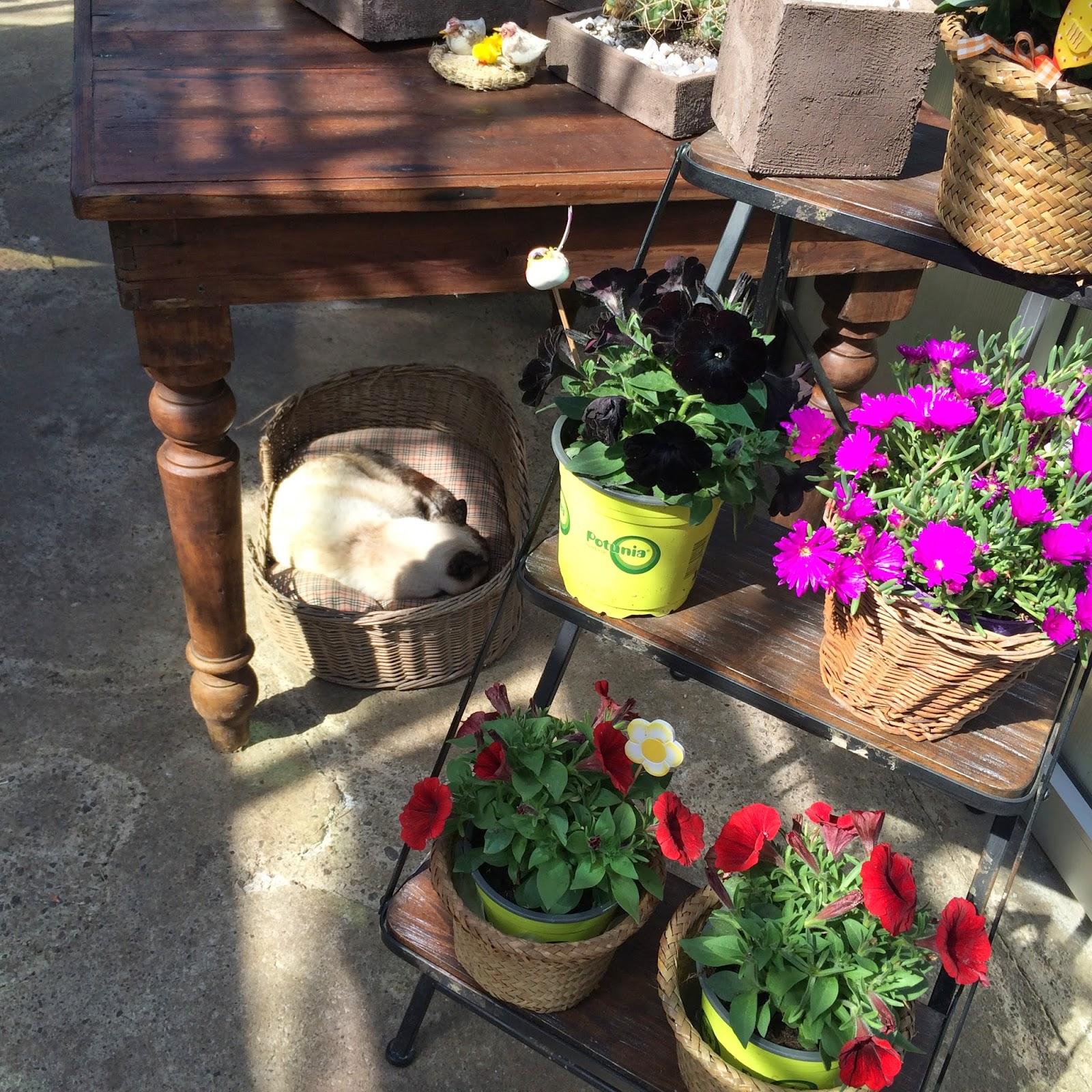 Garden La Piazza: Daniela Cerri : NEW Location Shop/Lab!!! GIPSY-SHABBY