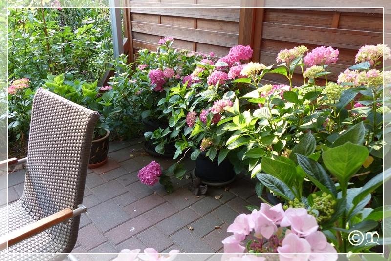 mein garten und ich mein hortensientopfgarten. Black Bedroom Furniture Sets. Home Design Ideas
