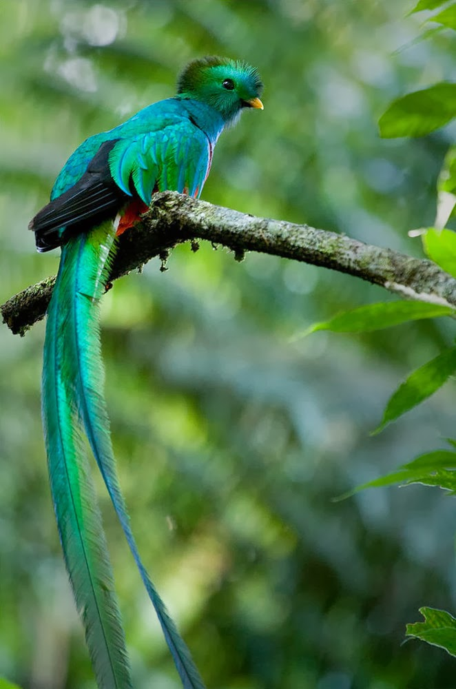 Guatemala Proudly Uses Images Of The Quetzal On Its Flag National Shield Postage Stamps And Has A Currency Called