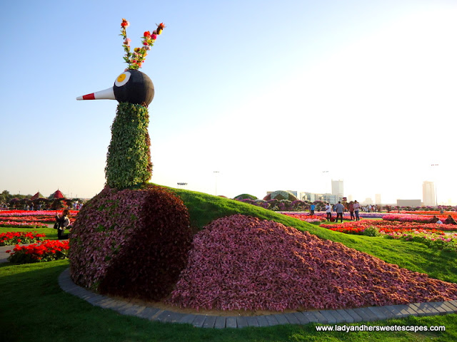 Duck at Dubai Miracle Garden